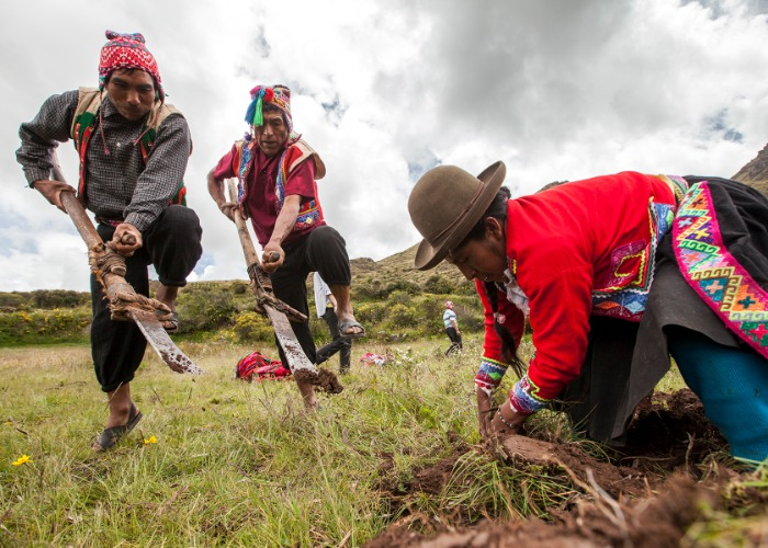 Caminata –tradiciones – desarrollo sostenible – comunidad – paisaje andino – fauna – local – aire libre – aplacas – paisaje – llamas –valle sagrado del cusco – animales – fauna – viaje – disfrute – largas caminatas en la sierra peruana – aventura - comunidad – actividades al aire libre - lodge - hostel - actividades - sierra – peru – lagos – paisajes – sierra peruana – sierra cusqueña – aire libre – lamay – camino inca – tradiciones – almuerzo típico – alimentos producidos por la comunidad de Lamay – tejido – arte de tejido – aprender a tejer – costumbres – rol de la mujer andina – tejido andino - Hiking - traditions - sustainable development - community - Andean landscape - fauna - local - open air - aplacas - landscape - llamas - sacred valley of Cusco - animals - fauna - travel - enjoyment - long walks in the Peruvian highlands - adventure - community - activities outdoor - lodge - hostel - activities - sierra - peru - lakes - landscapes - sierra peruana - sierra cusqueña - open air - lamay - inca trail - traditions - typical lunch - foods produced by the community of Lamay - weaving - art of weaving - learn to weave - customs - role of the Andean woman - Andean weaving